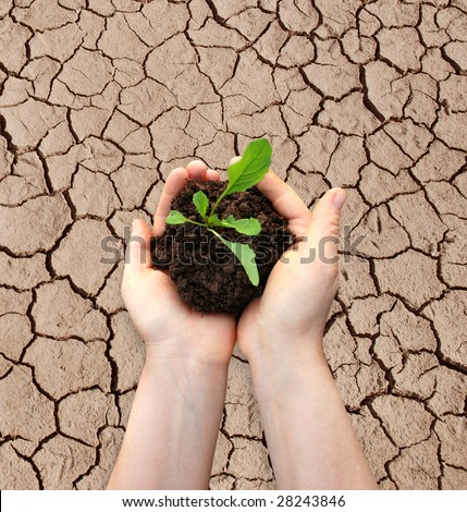 hands in soil - stock photo