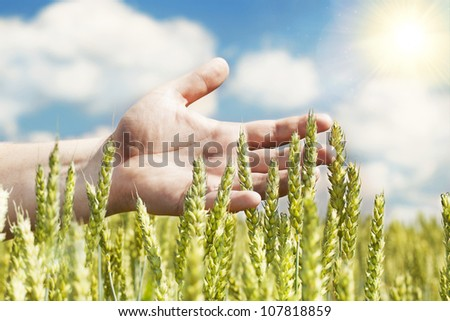 Hands near ears on cereals field in summer with sun beam - stock photo