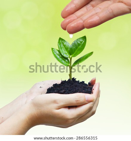 hands nurturing and watering a young plant / Love and protect nature concept - stock photo