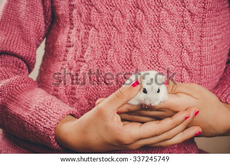 Hands of a girl with nails polished in pink holding a white hamster - stock photo