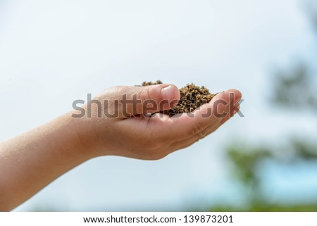 Hands of a little boy holding handful of earth