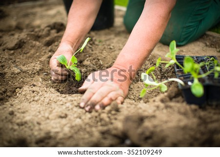 Hands of  a man planting his own vegetable garden
