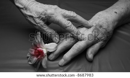 hands of an old woman and old man that are  touching a flower