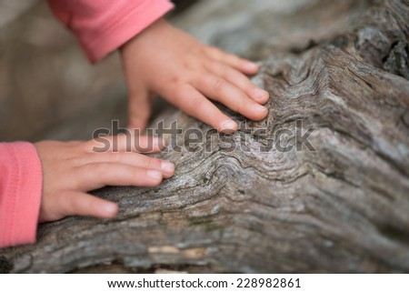 Hands of children that touch the old tree - stock photo