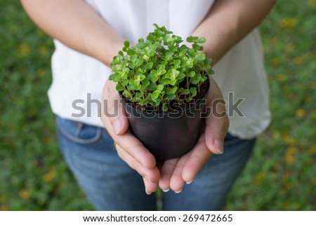 Hands of elderly girl holding a green natural background in spring. Ecology concept