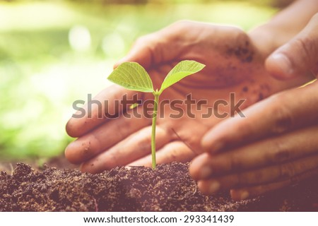 Hands of farmer growing and nurturing tree growing on fertile soil with green and yellow bokeh background / nurturing baby plant - stock photo
