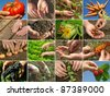 hands of farmer in action - stock photo