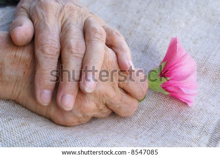 Hands of old woman holding a flower