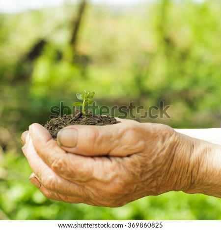 Hands of old woman with soil and plant. Symbol of life.