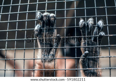 hands of primate in captivity