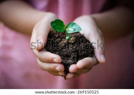 Hands of young girl holding a green young plant - stock photo
