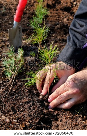 Hands planting a new forest - stock photo