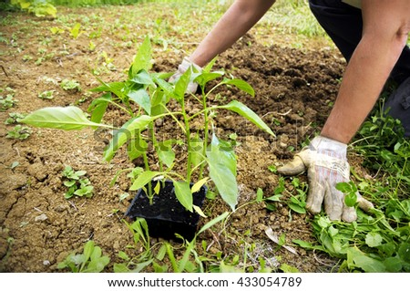 Hands planting in a field