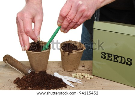 Hands planting pea seeds into pots on a potting bench - stock photo