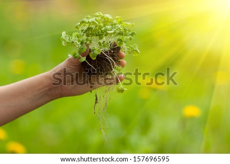 Hands planting plant in soil ground - stock photo