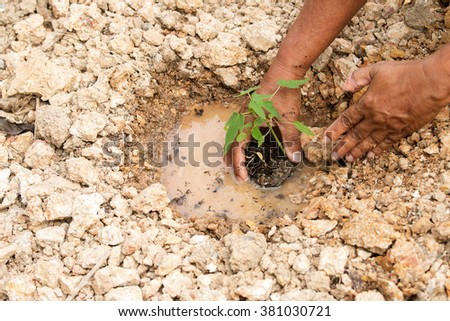 hands planting  trees. Ecology concept