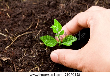 Hands planting young plant