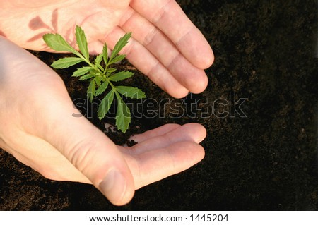Hands protecting a small plant
