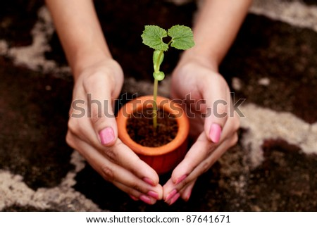 Hands protecting baby plant - stock photo