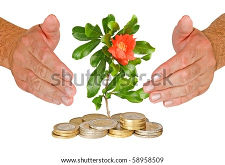 Hands protecting flower growng from pile of coins - stock photo