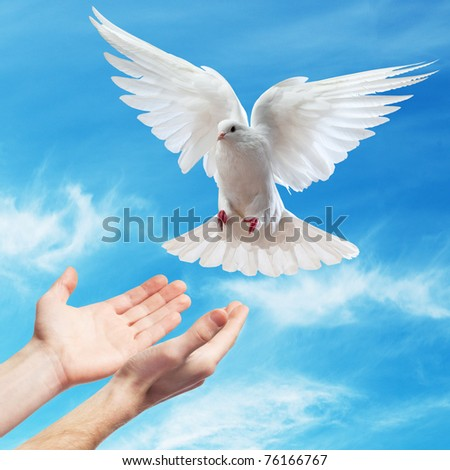 hands released into the blue sky to the sun a white dove - stock photo
