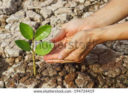 hands watering a tree on cracked earth / love nature / love tree  - stock photo