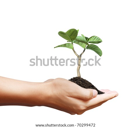 Hands with a tree - stock photo