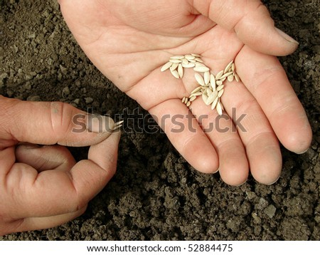 hands with cucumber seeds above the ground - stock photo