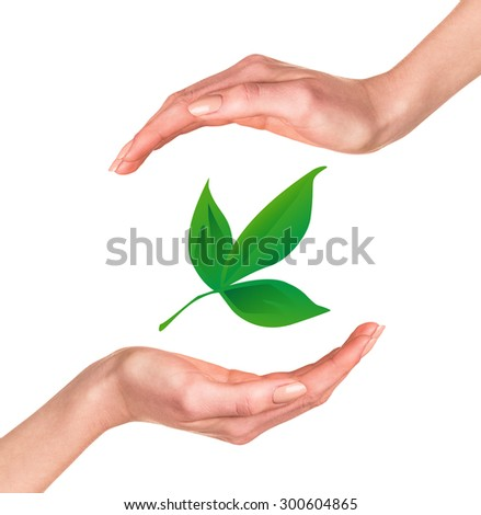 Hands with green leaf over white background - stock photo