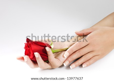 Hands with manicured nails and red rose. Space for text. - stock photo
