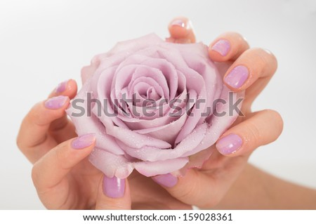 Hands with pastel lilac manicure holding a pale rose flower on neutral background  - stock photo