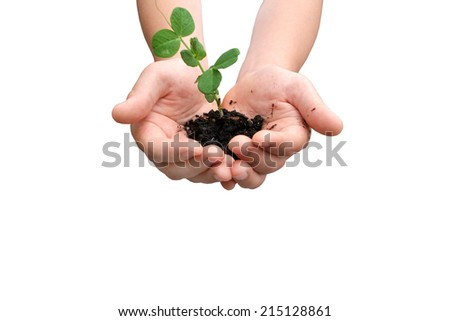 Hands with small pea plant with space for text - stock photo