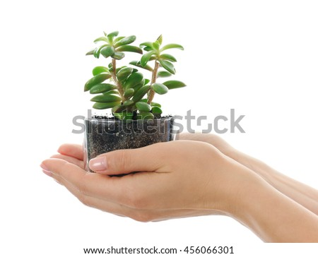 hands with succulent - stock photo