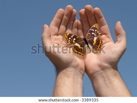 Hands with the butterfly on a background of the blue sky - stock photo