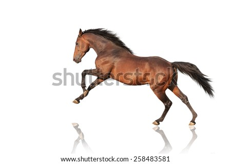 handsome brown stallion galloping, jumping. Thoroughbred horse isolated on white background - stock photo