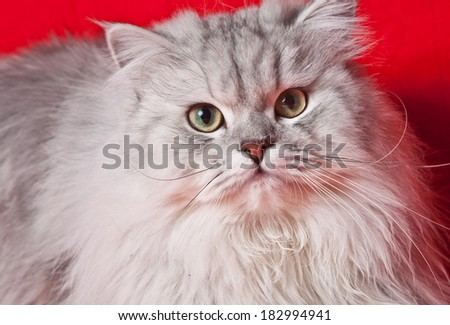 handsome cat - stock photo