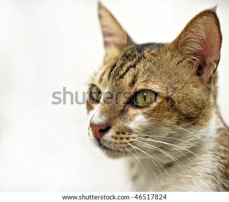 Handsome Cat - stock photo