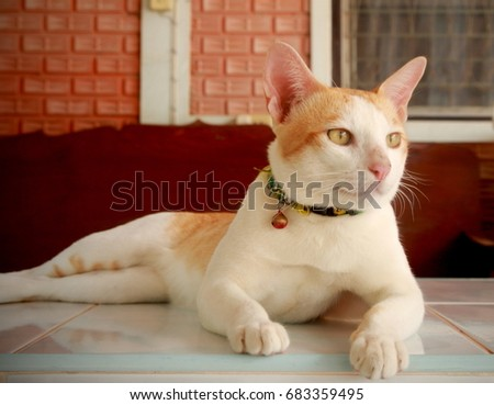 handsome cat have smile face and think of something