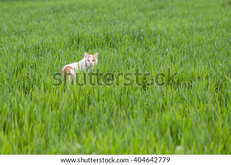 Handsome cat walking through the grass
