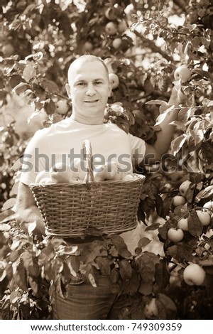 Handsome guy with basket of harvested apples in garden