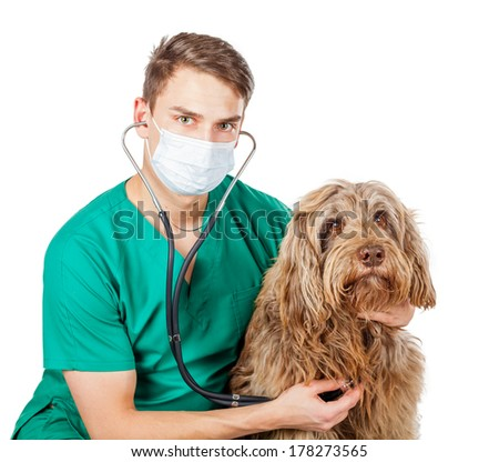 Handsome veterinarian doctor examining a puli dog  - stock photo