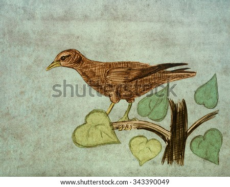Hangbird. Bird on a branch. Pencil sketch on the old paper. - stock photo