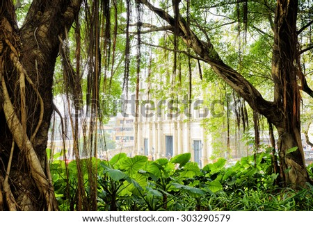 Hanging aerial roots of the green tree in city garden of Macau. The Ruins of St. Paul's Cathedral in the background. Macau is popular tourist attraction of Asia and leading casino market of the world. - stock photo