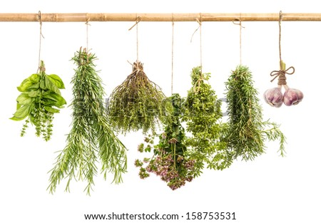 hanging bunches of fresh spicy herbs isolated on white background. rosemary, basil, thyme, oregano, marjoram, garlic. food ingredients - stock photo