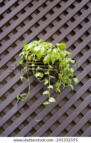 Hanging Flower Pots with fence - stock photo
