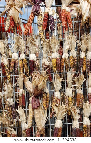 hanging Indiana corn in market place