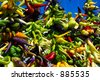 Hanging peppers - stock photo