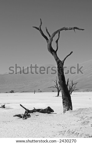 Hanging Tree - Dead Vlei, Namibia - stock photo