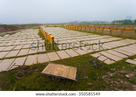 Hanoi, Vietnam,December 13, 2015: arrowroot vermicelli- a special Vietnamese noodles are being dried on bamboo fences going along the roads in Cu Da Village ( one Old village in Hanoi)