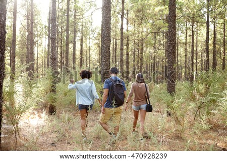 Happily relaxed friends walking in a pine tree forest in the late afternoon shadows while wearing casual clothing